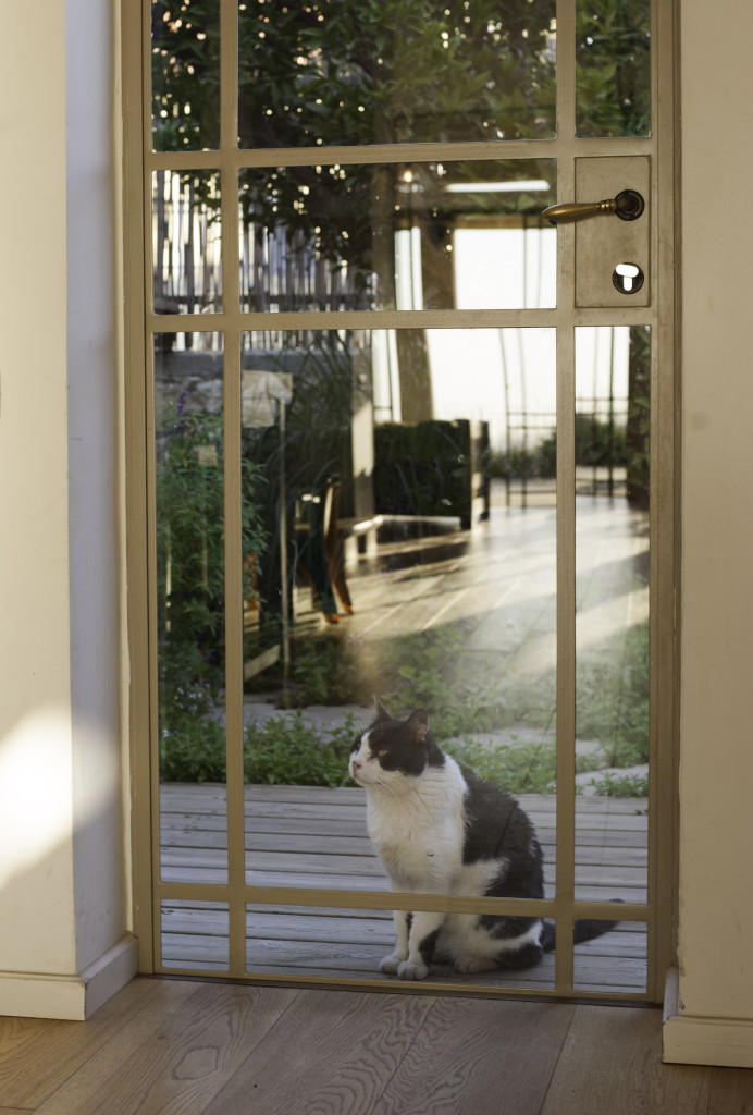 דלת פרופיל בלגי והחתול – ארטפרו בית עדי