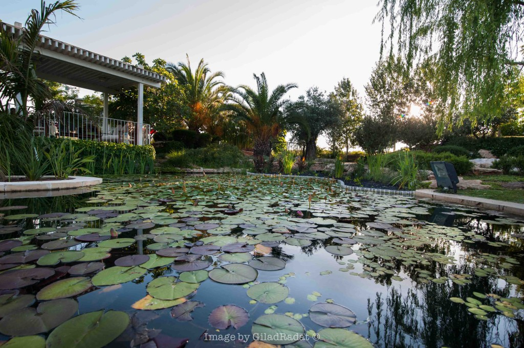 פסטורליה - פינת ישיבה על המים – פרוייקט אחוזה ביישובי גדרות - ארטפרו