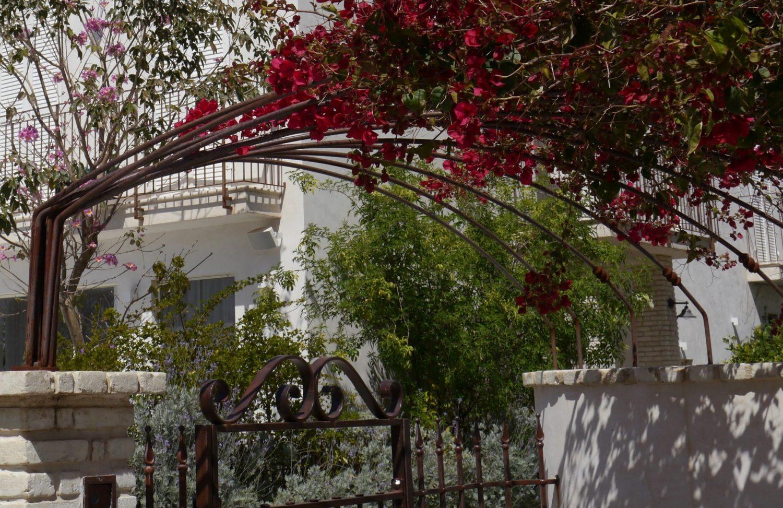 צמח הבוגנוויליה רוכב על גגון הברזל ומצל על העומדים בשער.... וגם כותרת נפחות לשער.